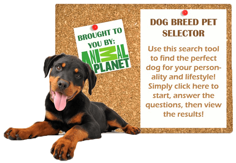 Dog-Breed-Selector-2