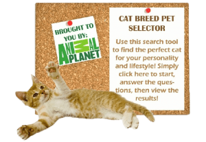 Cat-Breed-Selector-2-300x207-300x207